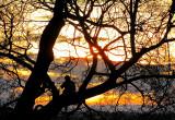 perché sur l'arbre, Parc Montmorency