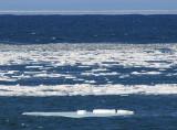 le Saint-Laurent glacé