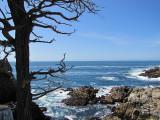Pebble beach state park