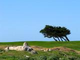 les arbres au vent