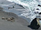 mammifères marins à Big Sur