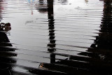 le plancher mouillé du Pier 39