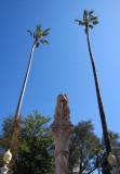 deux palmiers plutôt haut