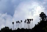 palmiers sous un ciel d'enfer
