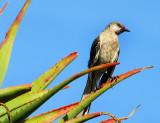 l'oiseau local squattant les cactus