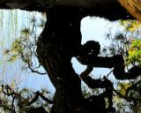 reflet  d'un arbre tordu