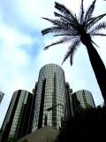 Downtown palmier