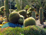 le jardin des cactus de Huntington