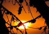 explosion solaire à travers les branches