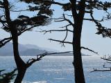 les deux arbres noirs devant la baie