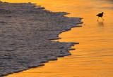 silhouette aviaire sur la plage