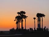 L'oasis de Venice