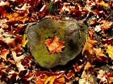la feuille au centre du tronc