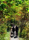 La promenade du chien