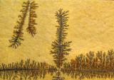 spectaculaire arborescence minérale