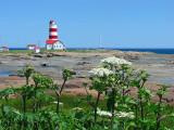 les fleurs parasols et le phare de Pointe des Monts