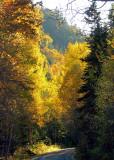 L'orée des bois