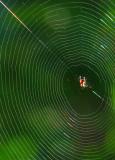 la grande toile de la petite araignée