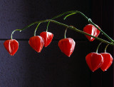 petite clochettes rouges