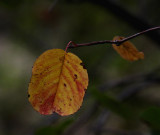 Campsite flora