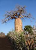 Madagascar; Oct - Nov 2008