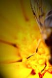 29th August 2008  marigold