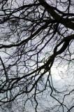 24th November 2009  dark and cold