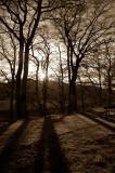3rd December 2007  pale warmth