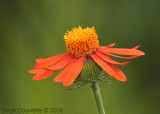 plantes_et_fleurs