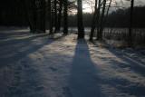 30 january 2010, De Bilt, Houdringe