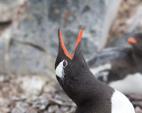Antarctica and the Drake Passage - Birds