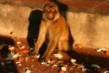Ape and tangerine peel