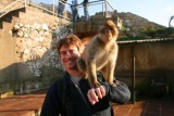 Paul and ape