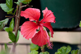 Flowering Stick 22/12