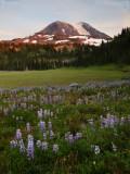 P8013843 Mt Adams at Glacier Basin.jpg