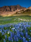 P8044320 Alpine Meadow in the Goat Rocks Wilderness.jpg