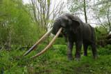 Remie Bakker doet mastodont van de Auvergne herleven