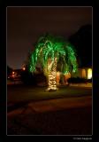 A Florida Xmas Tree