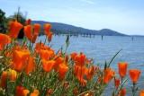 Vacation Trip to Oregon & California 2008