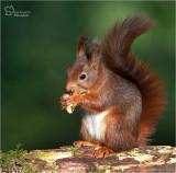 Squirrels in our garden