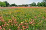 Spring, 2010 - So. Texas Wildflowers