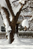 Our suet feeder tree