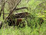 Rust Sanctuary?