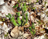 Plants along the trail