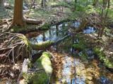 Crystal clear stream