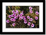 Arctic Wild Flowers