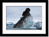 Tilted Iceberg