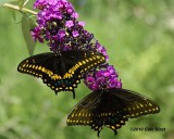nature_flowers_butterfly