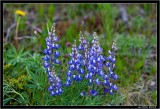 Teton Flora