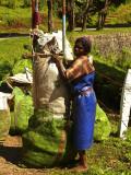 Female tea worker.jpg